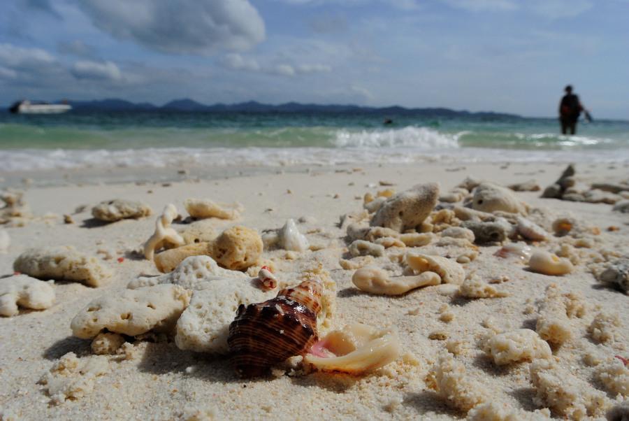 Thailand_Seashells_khai nai