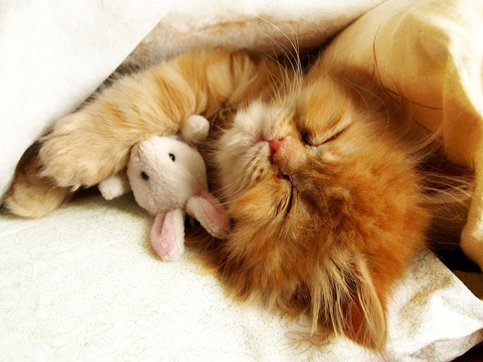 Sleep at least 8 hours per night