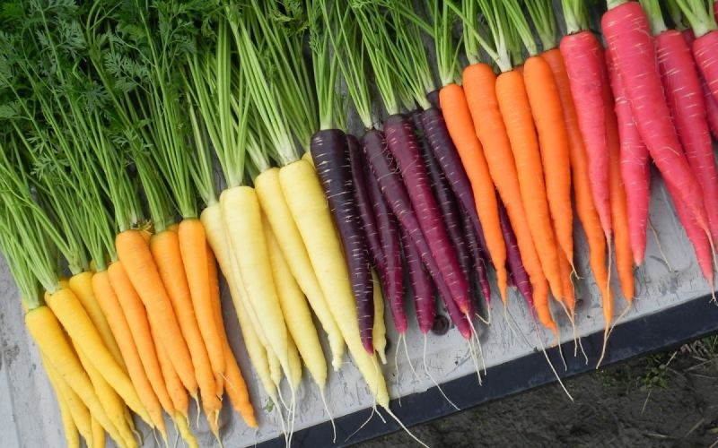 How much you know about super food – carrot?