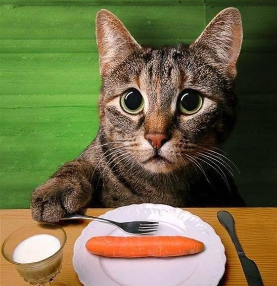 cat with carrot