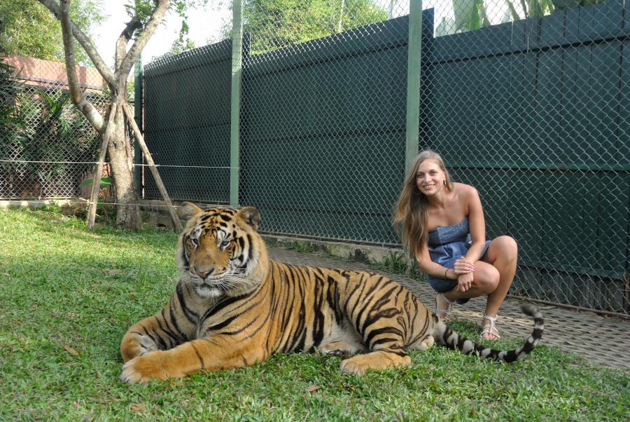tiger petting